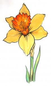 daffodil-web