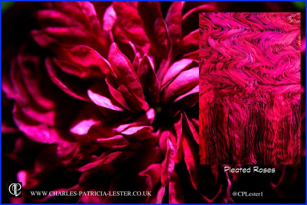 claret red swirled roses3